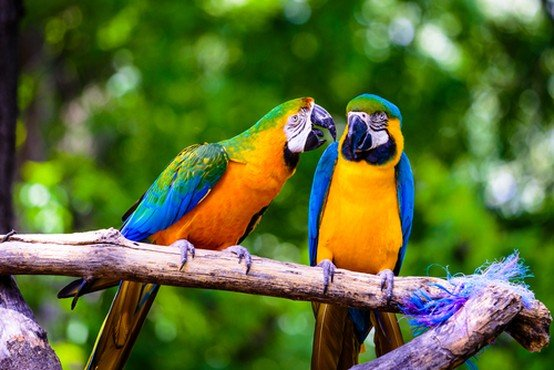 Visit Our Birds for Sale | Pittsburgh, PA | Petland Robinson