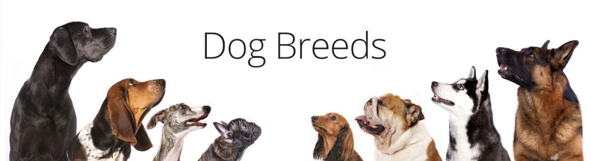 Dog Breeds at Petland Robinson