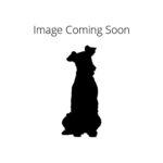 Petland Robinson Redbone Coonhound